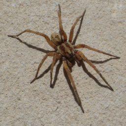 Уничтожение пауков в Раменском